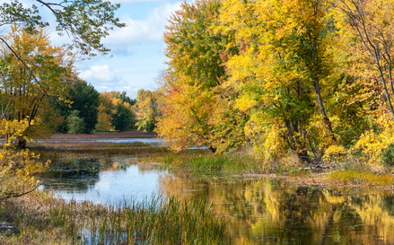 Beautiful sunshine through autumn deciduous marshland woods and wetlands on walking trail through Petris Island nature preserve in Orleans, Ontario, Canada.
